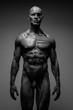 Anatomia mężczyzny