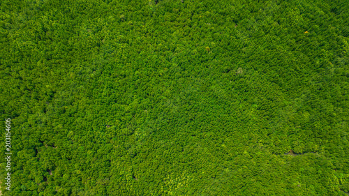 Spoed Foto op Canvas Groene aerial view landscape of Tree or forest , Krabi Thailand