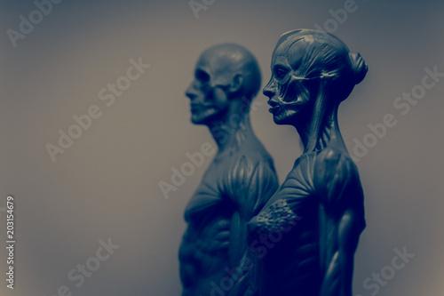 Anatomia - kobieta i mężczyzna Canvas Print