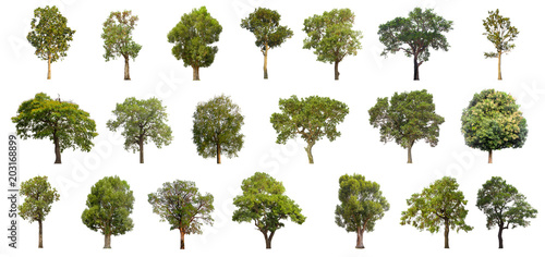 Poster Arbre collections green tree isolated. green tree isolated on white background.