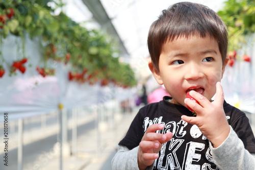 Fotografia  いちごを食べる男の子
