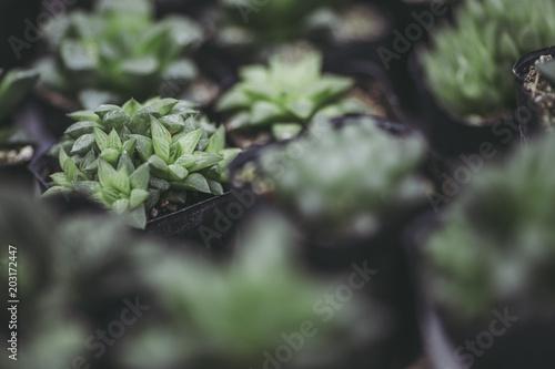 Foto  緑の植物