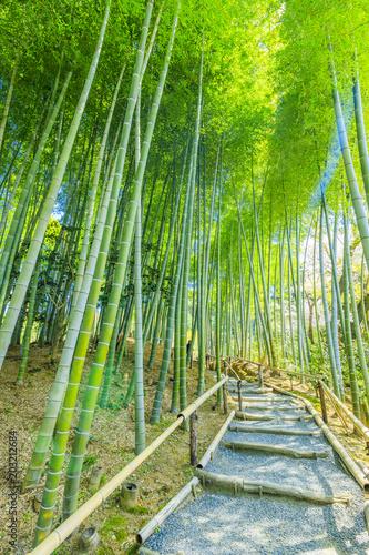Foto op Canvas Bamboo 竹林の風景