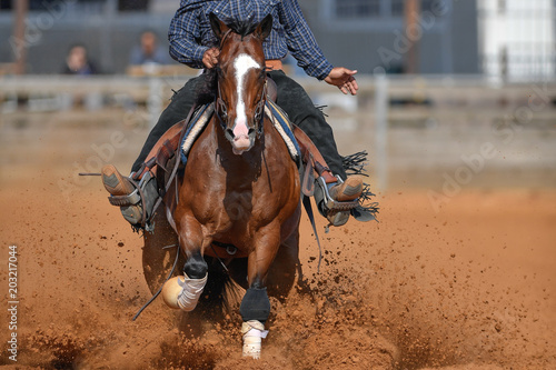 The front view of a rider in cowboy chaps and boots on a horseback stopping the horse in the dust.