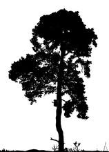 Vector Silhouette Pine Tree Wooden Birdhouse