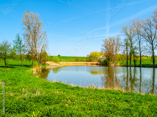 Tuinposter Blauw Small pond with row of trees in the middle of green rural landscape on sunny summer day.