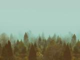 tło z rocznika lasu jesienią z copyspace - 203266293