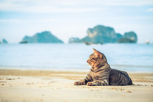 Cute Cat Relaxing On Railay Be...