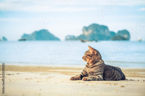 Fotobehang Kat cute cat relaxing on railay beach in Krabi , Thailand , Asia