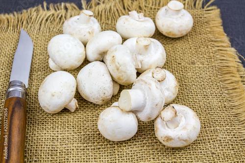 Obraz na plátně champignons de paris
