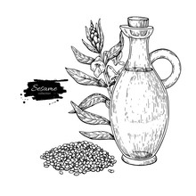 Bottle Of Sesame Oil With Plant. Vector Hand Drawn Illustration.