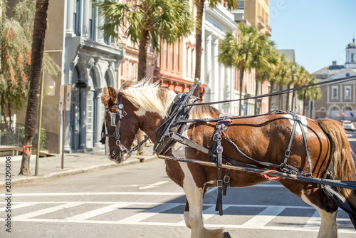 Fotografie, Obraz  historic charleston south carolina downtown scenery
