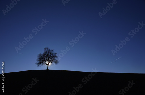Silhouette tree on field against blue sky at night