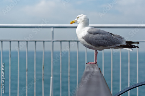 Photo Gabbiano e panchina sul traghetto
