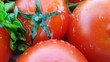 tasty red tomatoes and fresh herbs poured with fresh cold water