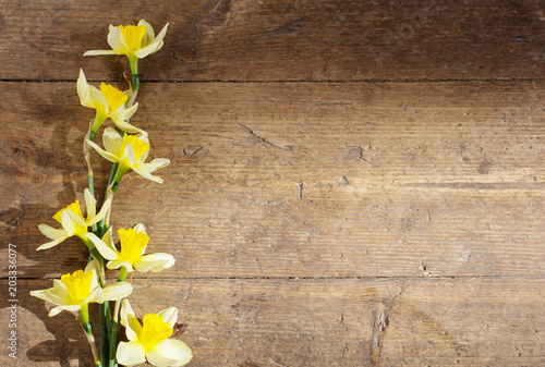 yellow narcissus on old wooden background