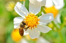 Little Bee Hang On The White F...