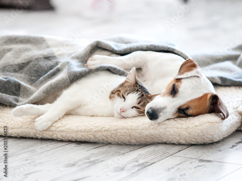 mata magnetyczna Cat and dog sleeping