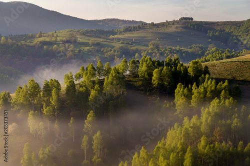 Foto op Aluminium Heuvel Spring foggy morning with trees on hills in Apuseni Mountains, Romania