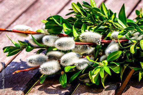 little palm bush