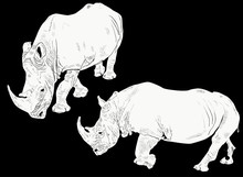 Two White Rhinoceroses Isolate...
