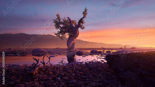 Valokuvatapetti Einsamer Baum in der Wüste