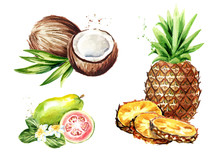 Tropical Fruit Set. Coconut, Pineapple, Guava.. Watercolor Hand Drawn Illustration,  Isolated On White Background