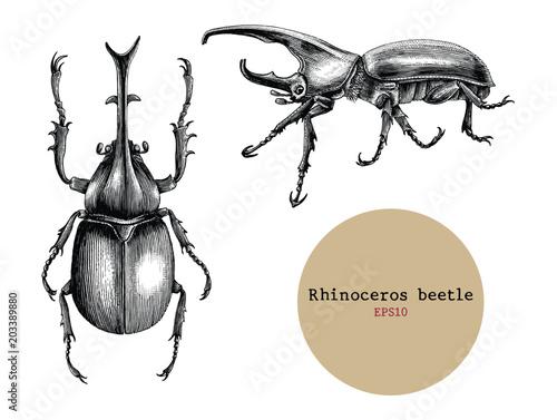 Obraz na płótnie Rhinoceros beetle hand drawing vintage engraving illustration,Drawing design for