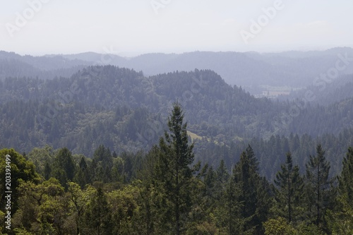 Photo Armstrong Redwoods State Natural Reserve, California,  United States - to preserve 805 acres (326 ha) of coast redwoods (Sequoia sempervirens)