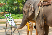 Elephant Painting In Picture E...