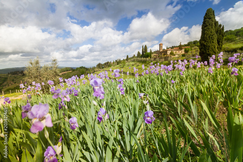 Foto  Tuscan vineyard landscape with iris blooming, characteristic Church and cypresse