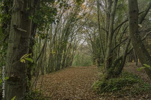 Tuinposter Weg in bos EL BOSQUE EN OTOÑO