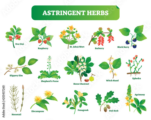 Photo Astringent herbs vector illustration collection