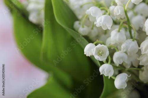 Plakat naturalne białe kwiaty kwitnące wiosną konwalie