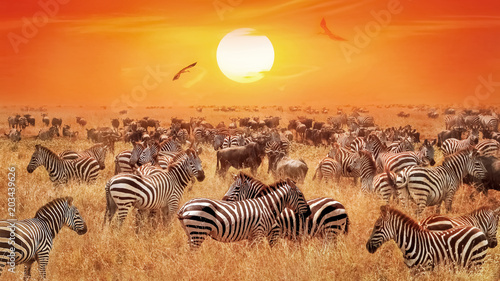 Groupe of wild zebras and antelopes in the African savanna against a beautiful orange sunset. Wild nature of Tanzania. Artistic natural african image.