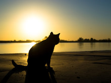 Cat Silhouette At Sunset, The Shadow Of The Animal On The Shore Of The Pond