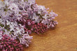 Lilac on the table close up