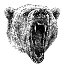 Black And White Engrave Isolated Bear Illustration