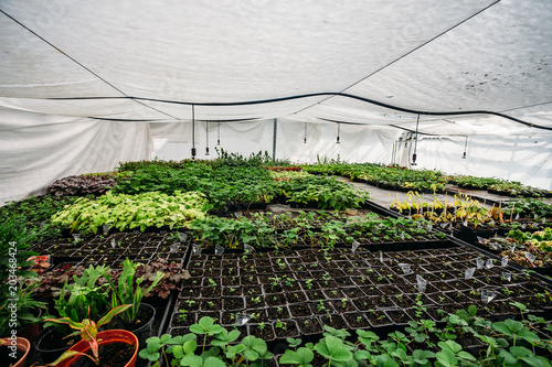 Fotografía Modern hydroponic greenhouse or glasshouse, cultivation and growing of ornamenta