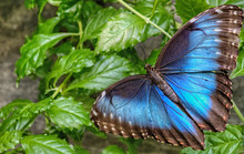 The Sertoma Butterfly House An...