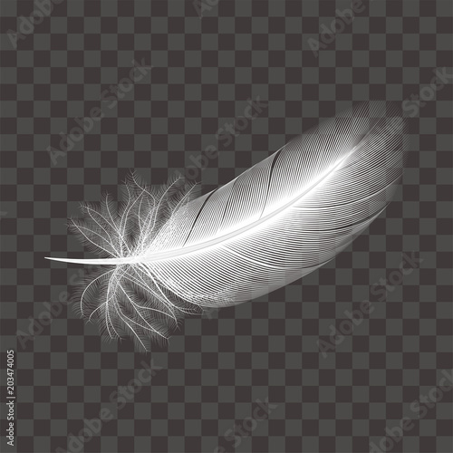 Obraz na plátně  鳥の白い羽根