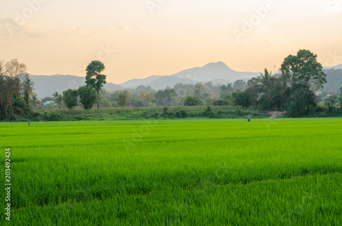 Foto op Canvas Beige The landscape of agricultural area rice field and mountains view in the evening, Thailand