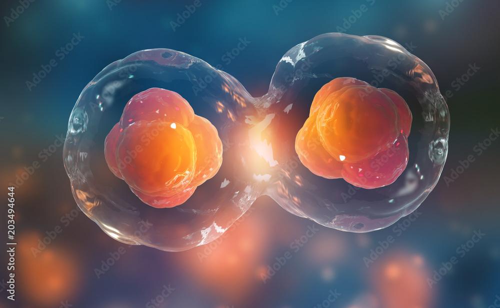 Fotografie, Obraz Cells under a microscope