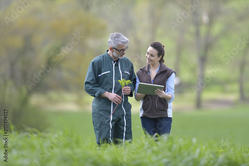 Fototapeta Farmer with agronomist walking in agricultural field obraz