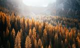 Wspaniały widok na żółte modrzewie. Park Narodowy Tre Cime di Lavaredo, Dolomiti alp, Tyrol, Włochy. - 203502223