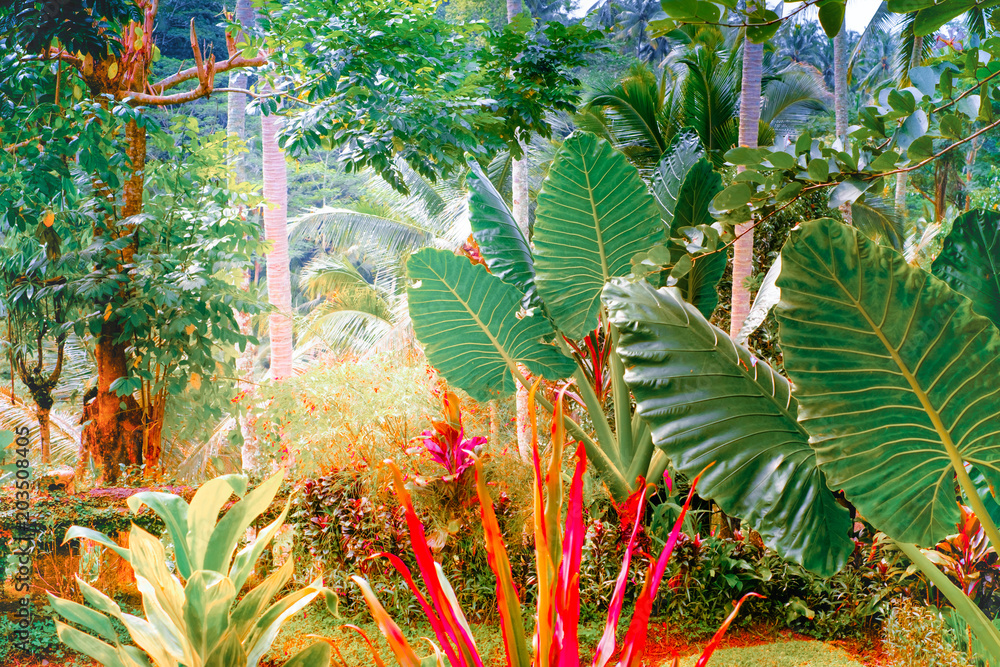 Fototapeta Surreal colors of fantasy tropical nature