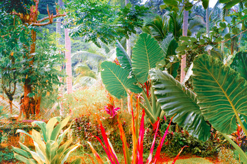 FototapetaSurreal colors of fantasy tropical nature