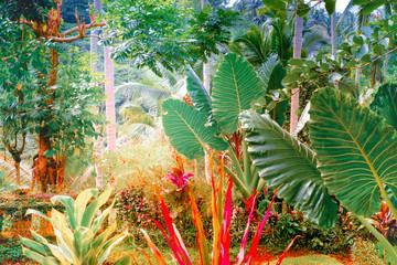 Obraz na SzkleSurreal colors of fantasy tropical nature