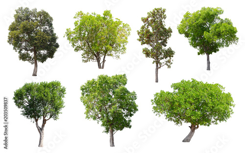 Isolated Trees on white background, Collection of trees.