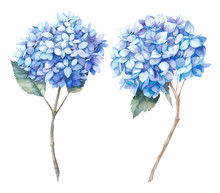 Watercolor Blue Hydrangea Set....